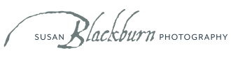 Blackburn Portrait Design