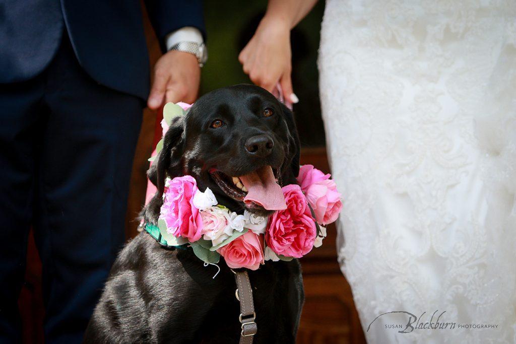 Pet Wedding Day Photos